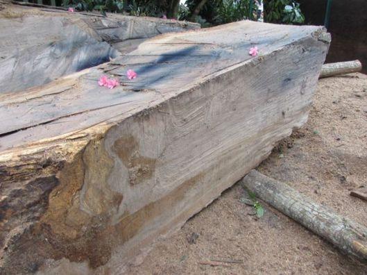 trunk slab