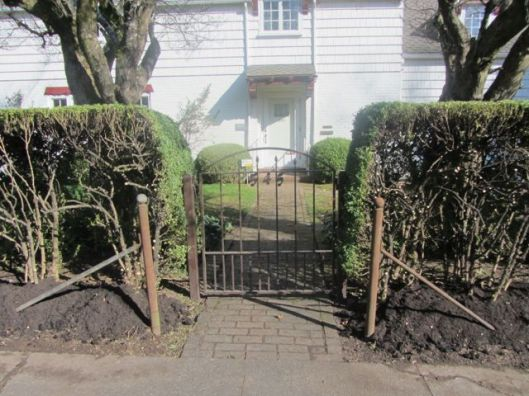 hedges 3