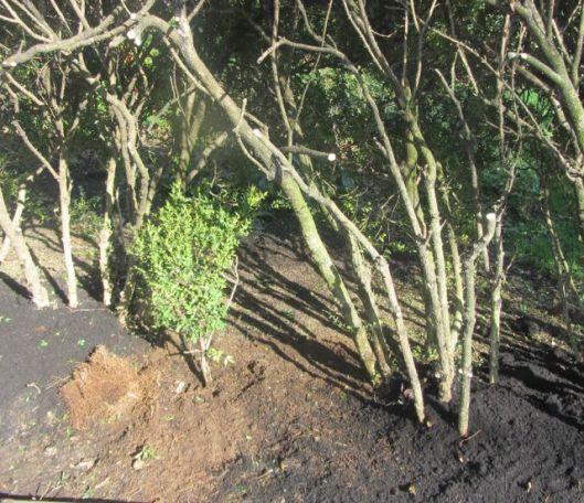 hedges 5