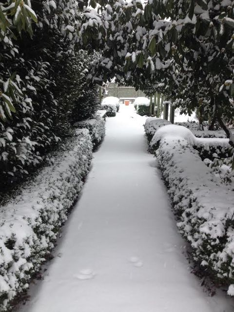 L&S Snow 3