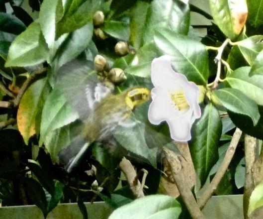 warbler 2