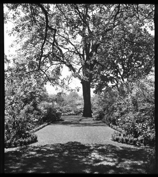 knight-library-home-garden-west-allee-looking-south-lantern-slide