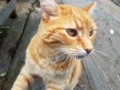 Joe the Cat at Godfrey Nursery