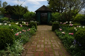 The Teahouse Garden Tulips are just about to hit peak bloom right in time for easter