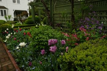 Tulipa 'Caravalle'