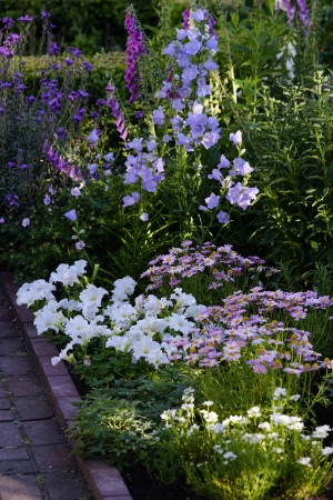 Petunia's and Marguerite Daisies hold up to the heat well.