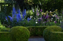 The Delphinium are standing tall with the Foxglove.