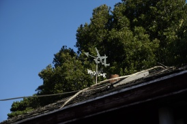 Swallows on the weather vane for the little cottage at Swallow Drive.